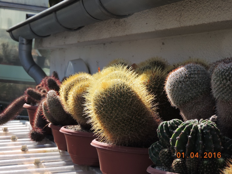 Cacti and Sukkulent in Köln, every day new flowers in the greenhouse Part 140 Bild_151