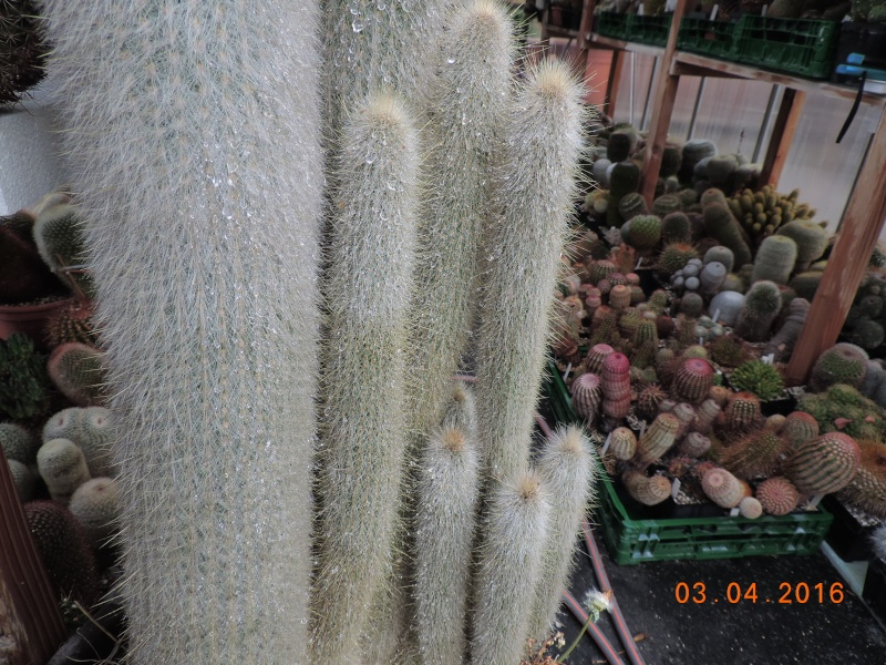 Cacti and Sukkulent in Köln, every day new flowers in the greenhouse Part 140 Bild_162