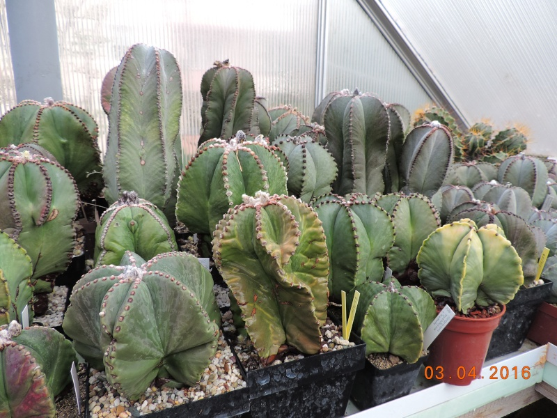 Cacti and Sukkulent in Köln, every day new flowers in the greenhouse Part 140 Bild_165