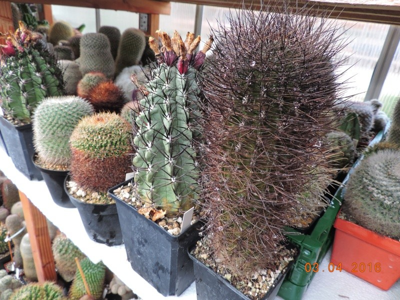 Cacti and Sukkulent in Köln, every day new flowers in the greenhouse Part 140 Bild_168