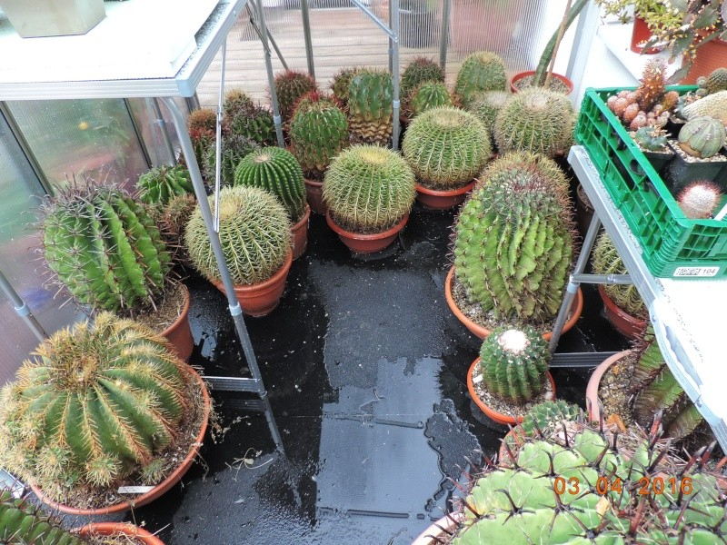 Cacti and Sukkulent in Köln, every day new flowers in the greenhouse Part 140 Bild_170