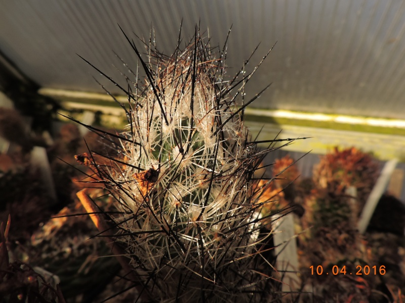 Cacti and Sukkulent in Köln, every day new flowers in the greenhouse Part 140 Bild_182