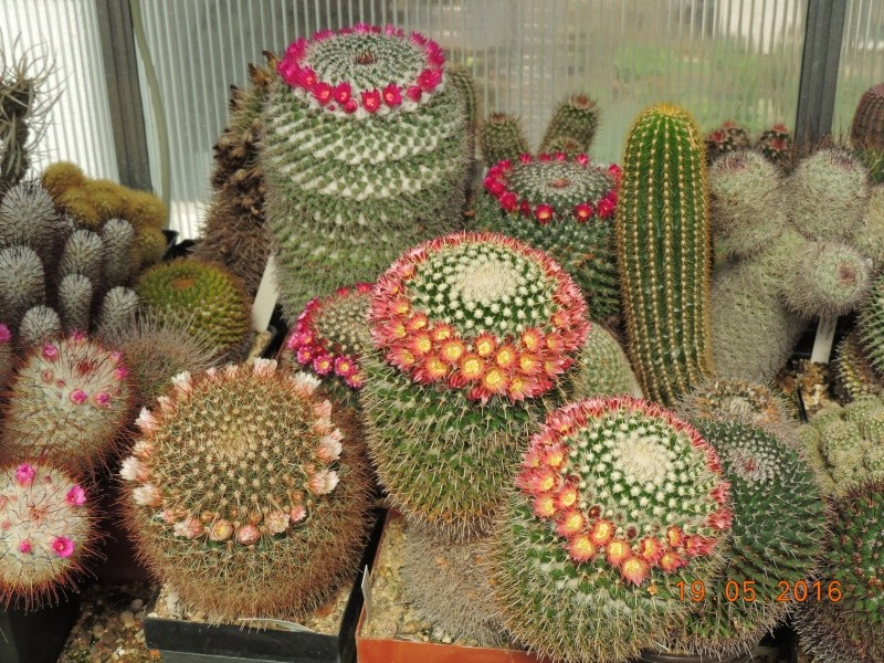Cacti and Sukkulent in Köln, every day new flowers in the greenhouse Part 143 Bild_595
