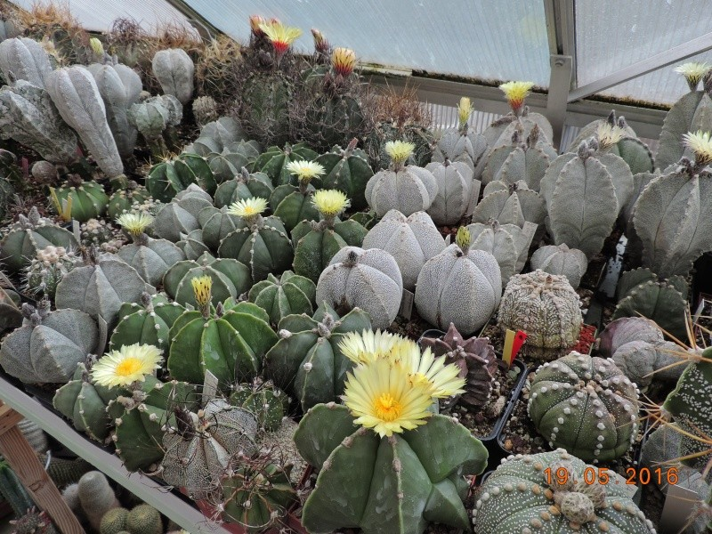 Cacti and Sukkulent in Köln, every day new flowers in the greenhouse Part 143 Bild_603