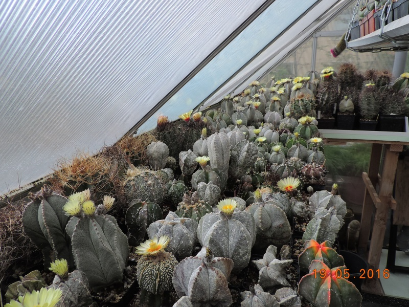Cacti and Sukkulent in Köln, every day new flowers in the greenhouse Part 143 Bild_621