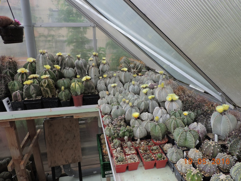 Cacti and Sukkulent in Köln, every day new flowers in the greenhouse Part 143 Bild_623