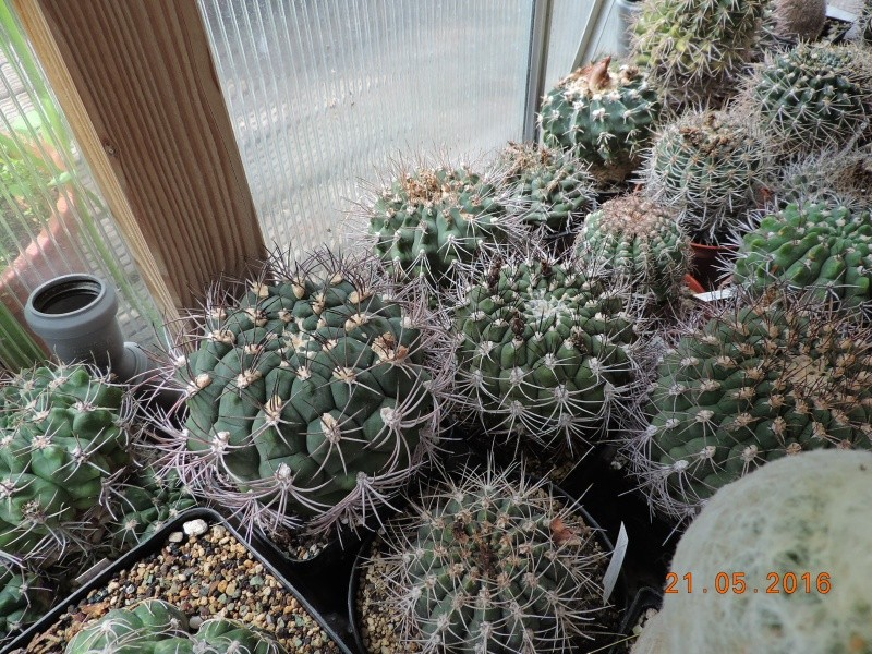 Cacti and Sukkulent in Köln, every day new flowers in the greenhouse Part 143 Bild_639