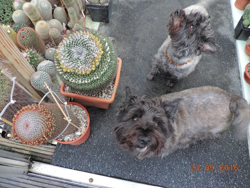 Cacti and Sukkulent in Köln, every day new flowers in the greenhouse Part 144 Bild_671