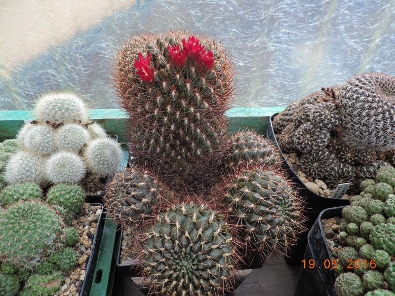 Cacti and Sukkulent in Köln, every day new flowers in the greenhouse Part 144 Bild_691