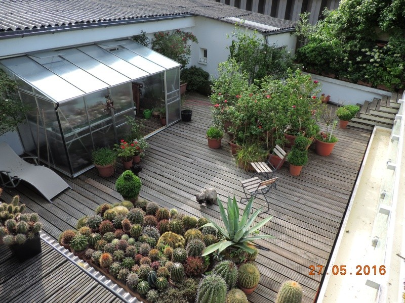 Cacti and Sukkulent in Köln, every day new flowers in the greenhouse Part 144 Bild_727