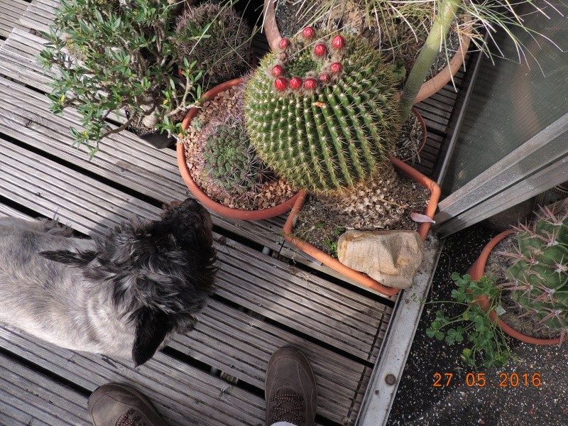 Cacti and Sukkulent in Köln, every day new flowers in the greenhouse Part 144 Bild_728
