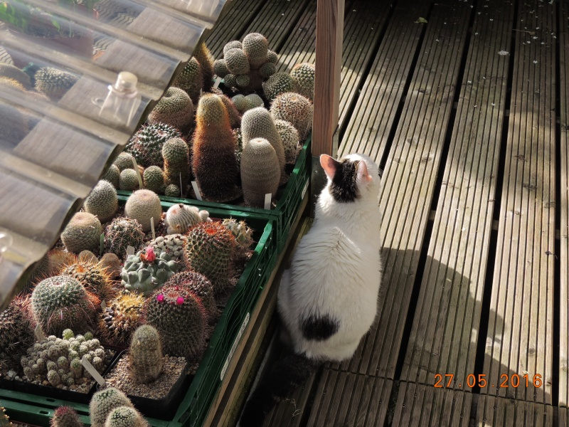 Cacti and Sukkulent in Köln, every day new flowers in the greenhouse Part 144 Bild_733