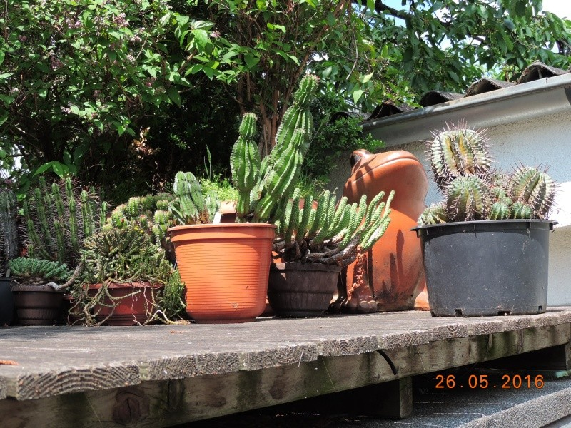 Cacti and Sukkulent in Köln, every day new flowers in the greenhouse Part 144 Bild_760