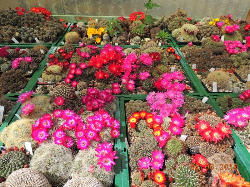 Cacti and Sukkulent in Köln, every day new flowers in the greenhouse Part 144 Bild_787