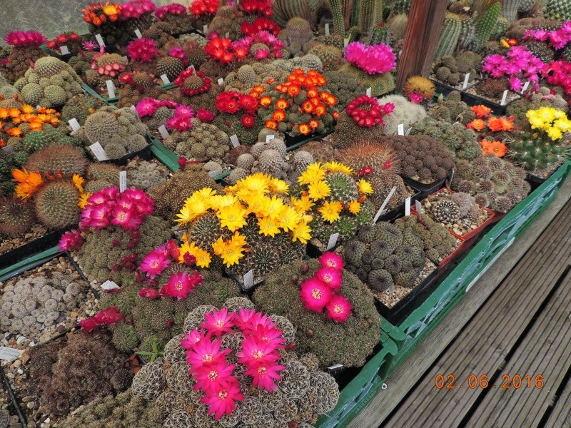 Cacti and Sukkulent in Köln, every day new flowers in the greenhouse Part 144 Bild_790