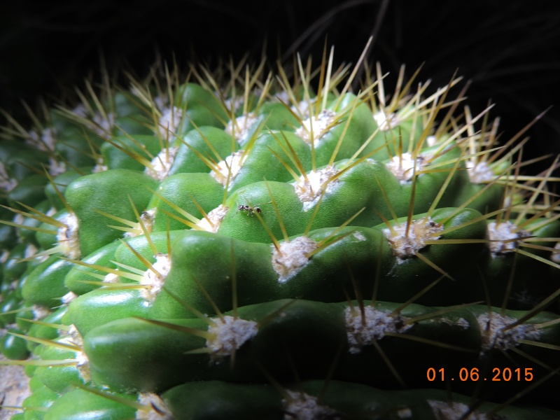 Cacti and Sukkulent in Köln, every day new flowers in the greenhouse Part 139 Bild_925