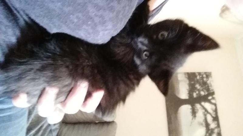 Thïa, (ex Minnie) femelle européenne noire estimée née 20/03/2016 20160139