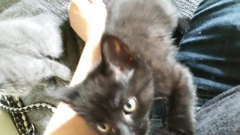 Thïa, (ex Minnie) femelle européenne noire estimée née 20/03/2016 20160140