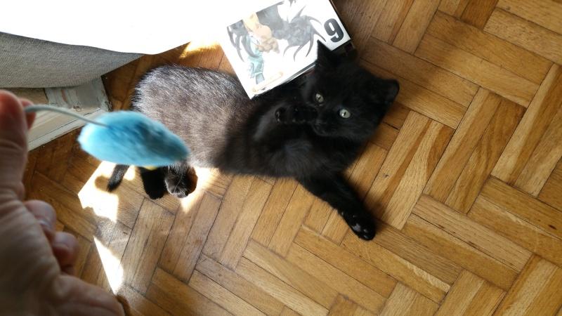 Thïa, (ex Minnie) femelle européenne noire estimée née 20/03/2016 20160151