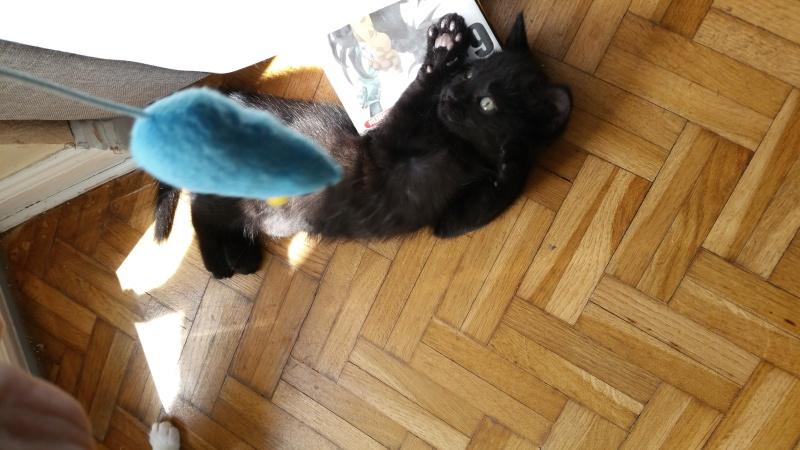 Thïa, (ex Minnie) femelle européenne noire estimée née 20/03/2016 20160152