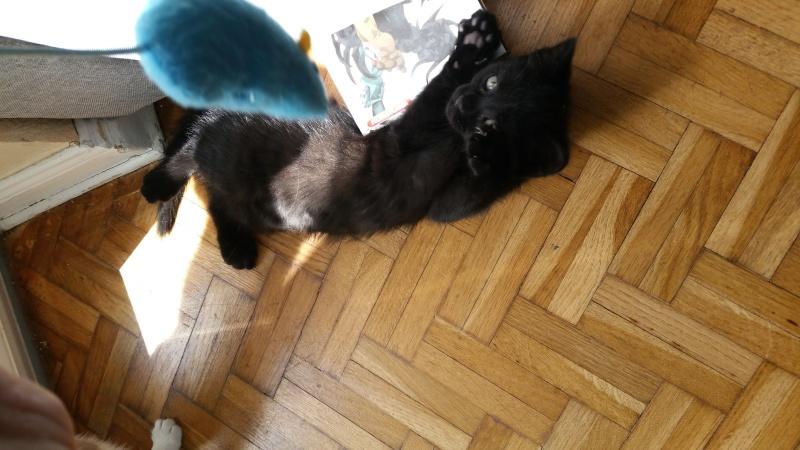 Thïa, (ex Minnie) femelle européenne noire estimée née 20/03/2016 20160153