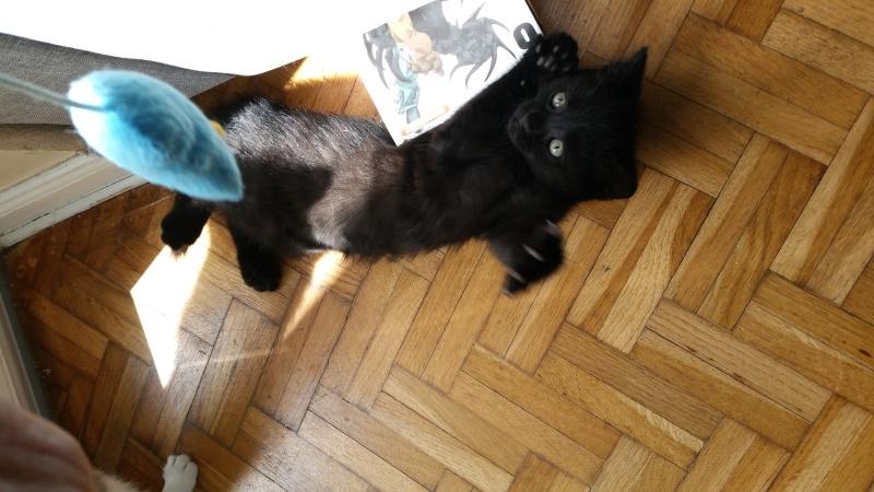 Thïa, (ex Minnie) femelle européenne noire estimée née 20/03/2016 20160156