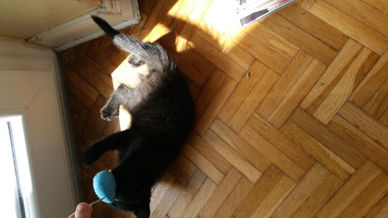 Thïa, (ex Minnie) femelle européenne noire estimée née 20/03/2016 20160159