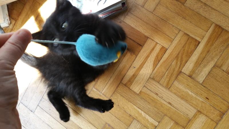 Thïa, (ex Minnie) femelle européenne noire estimée née 20/03/2016 20160162