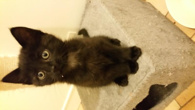 Thïa, (ex Minnie) femelle européenne noire estimée née 20/03/2016 20160582