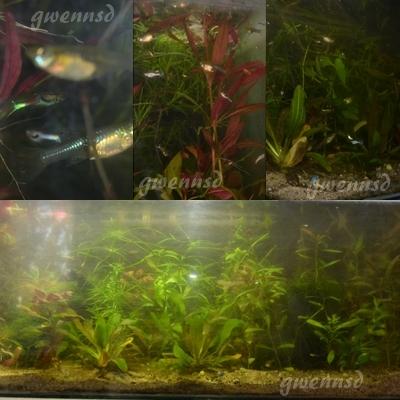 [VDS] Plantes (76) Mont110
