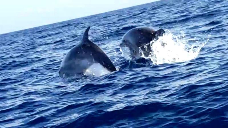 Sul mare e sul suo potere di ringiovanire..  Delfin10