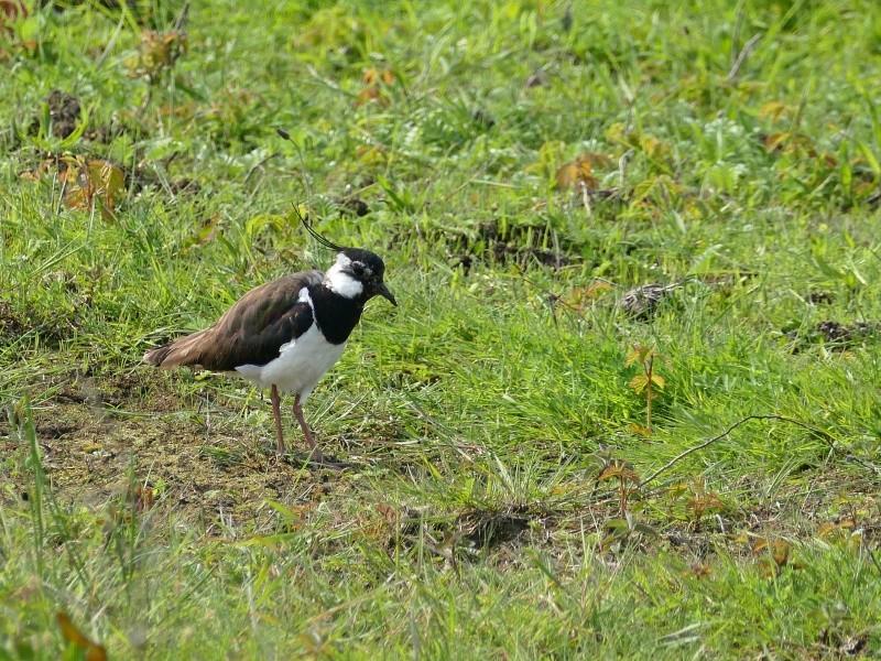 Oiseaux en mode i.zoom du FZ1000 P1060313
