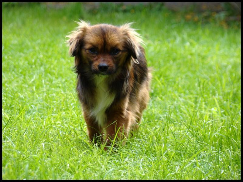 SARBANE (ex SARBACANE) mâle, petite taille né juillet 2015 (Pascani) - adopté par Peggy (dpt51) Dsc05010