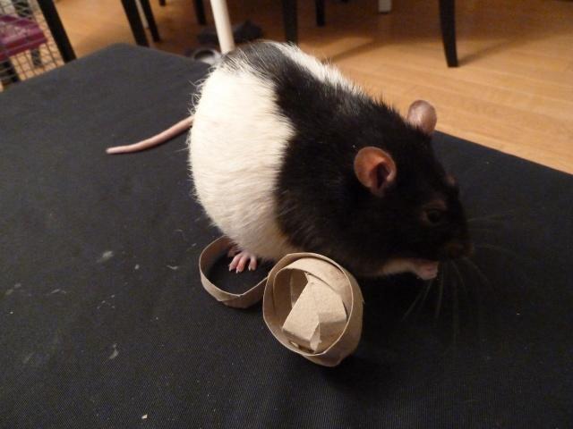 Jouet pour rat P1220310