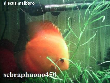 Aquariophilie 56 du Morbihan 14595912