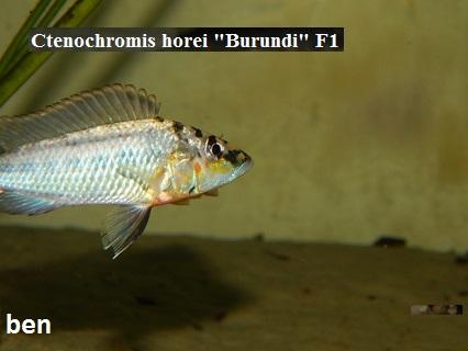 Aquariophilie 56 du Morbihan Ben12