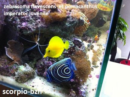 Aquariophilie 56 du Morbihan Scorpi10