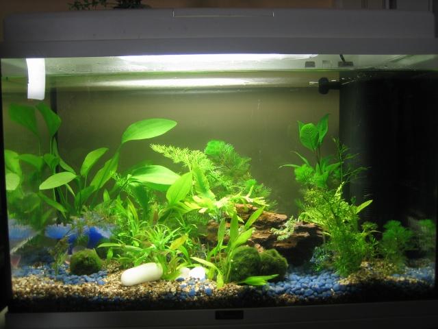 mon aquarium qui n'attend plus que ses poissons... Img_0612