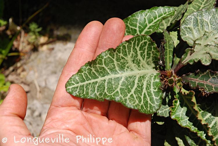 Euphorbia francoisii - Page 17 Dsc_6410
