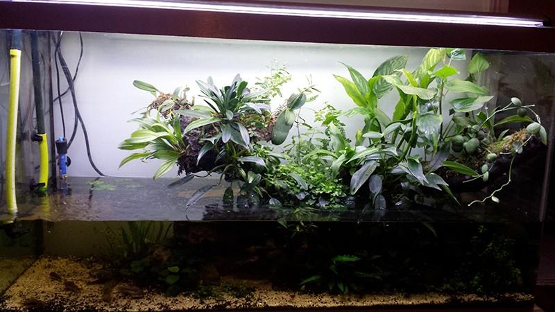 Mur végétal avec aquarium de 320L ---> Paludarium - Page 16 1710
