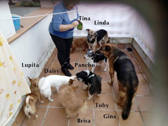 AU - Gina 12994410