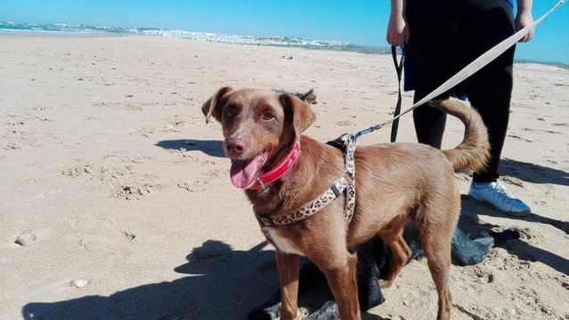 Canis - Golfo 13239110