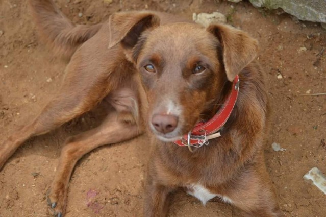 Canis - Golfo 13266010