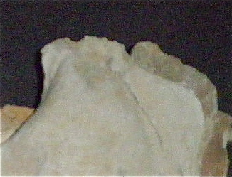 Huîtres et microfossiles charentais  P3221912