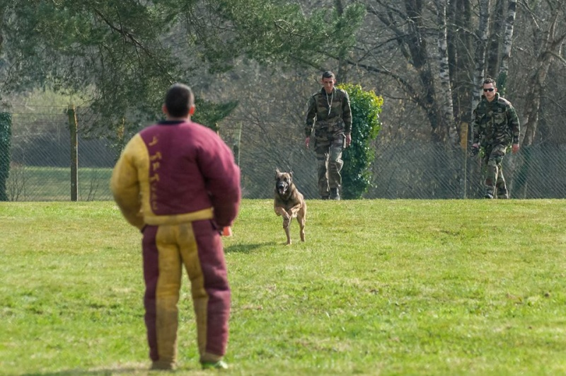 Animaux soldats - Page 6 2014