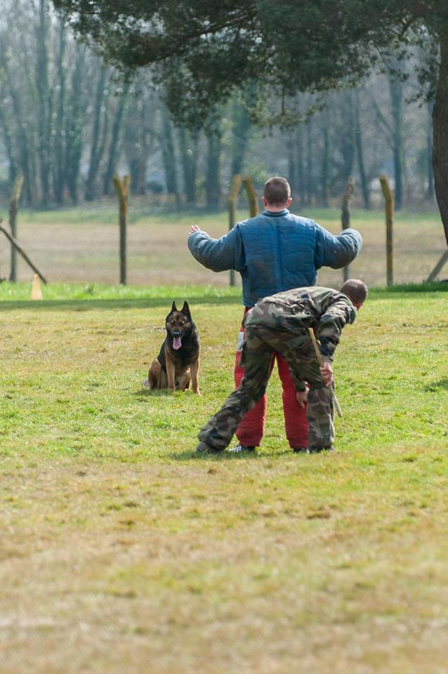 Animaux soldats - Page 6 2210