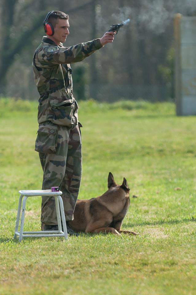 Animaux soldats - Page 6 2310