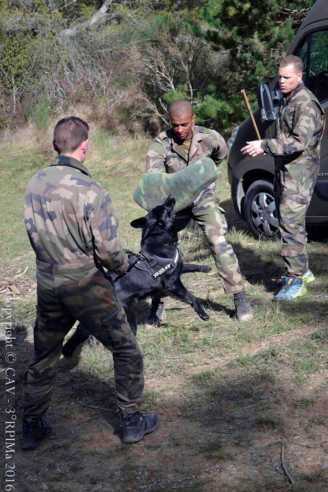 Animaux soldats - Page 6 2412