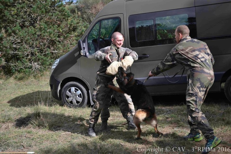 Animaux soldats - Page 6 2511