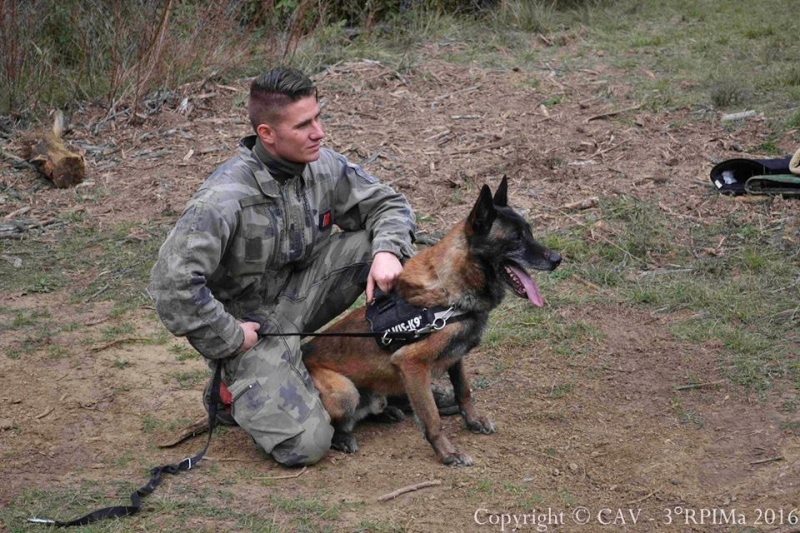 Animaux soldats - Page 6 2611